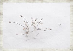 first_snow.xlarge