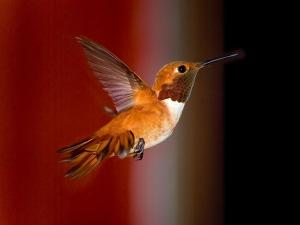 hummingbird.xlarge